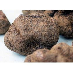 Truffe noire fraîche (tuber melanosporum)
