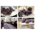 Carte postale « Messe truffe » - Maison de la Truffe d'Occitanie