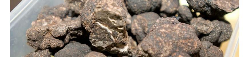 Truffes fraîches - Maison de la Truffe d'Occitanie